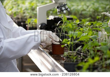 Agronomist Holding Seedling In Flower Pot In Greenhouse