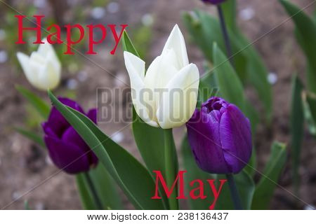 Flowers, Flowers Tulips, Flowers Concept, Natural Flowers, Red Flowers, Yellow Flowers, Flowers Of T