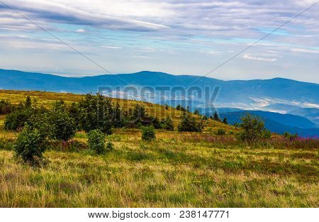 Grassy Meadow With Purple Flowers On The Slope Of A Hill. Summer Landscape On Overcast Weather Over