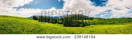 Panorama Of Mountainous Landscape In Springtime. Spruce Forest On A Grassy Hills In The Valley Of Ca