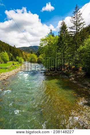 River Flows Among Of A Green Forest At The Foot Of The Mountain. Picturesque Nature Of Rural Area In