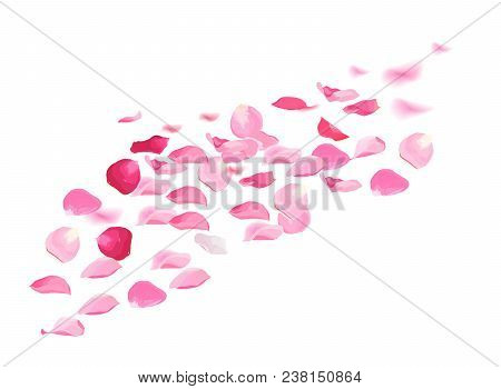 Pink Rose Petals Pile Vector Design Set.flying In The Air Flowers Petal Isolated On White Background