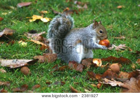 Squirrel Snack