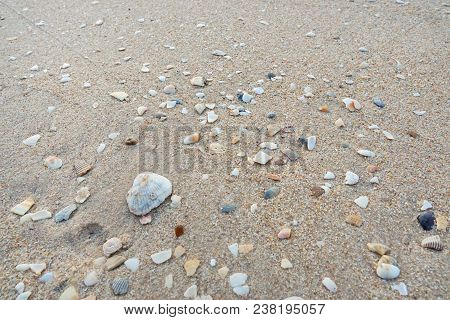 Abstract, Shells On Sandy Beach Background. Sandy Beach For Background. Top View. Space For Your Tex