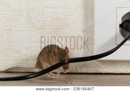 Closeup Broken Wire  On The Background Of Mouse Near Wall Inside High-rise Buildings. Fight With Mic