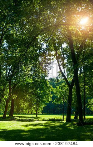 Summer Landscape - Summer City Park With Deciduous Green Summer Park Trees In Sunny Summer Day. Summ