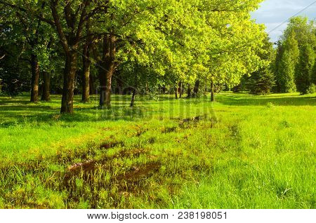 Spring Landscape. Green Spring Park Trees And Flooded Spring Lawn In The Park In Sunny Spring Weathe