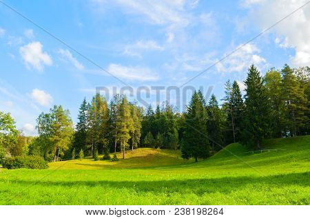 Forest spring landscape - dense spring forest trees in the valley in sunny spring weather. Colorful spring forest landscape scene with forest trees in the spring forest valley