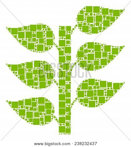 Flora Plant Collage Icon Of Square Figures And Round Items In Variable Sizes. Vector Items Are Organ