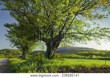 Travel Alone Through Countryside Landscape. Early Spring In Countryside Landscape. Countryside. Land