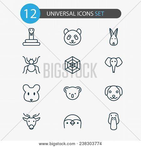Animal Icons Set With Rabbit, Mallard, Penguin And Other Cobweb Elements. Isolated Vector Illustrati