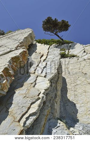 Lonely Tree Growing On Top Of The Rocky Mountain. Lone Tree On A Top Mountain In Sunny Day. Crimea P