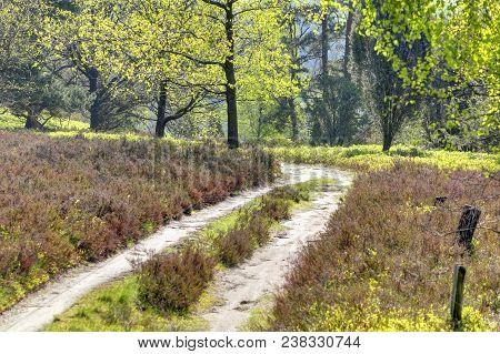 Hiking Trail In Spring, Lüneburg Heath Nature Park (nature Reserve), Northern Germany. Backlit Photo