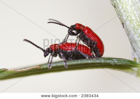 Bugs On The Leaf