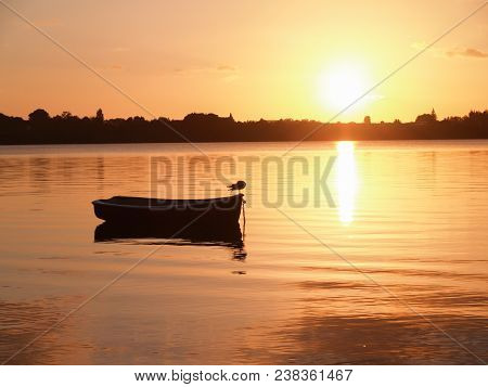 Seagull On Front Of Small Dinghy Afloat And Silhouetted On Red Tauranga Harbour Water At Sunrise