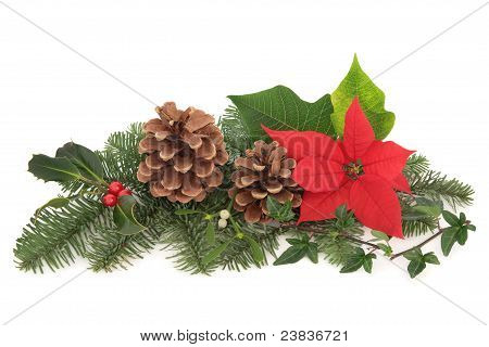 Christmas Flora And Fauna