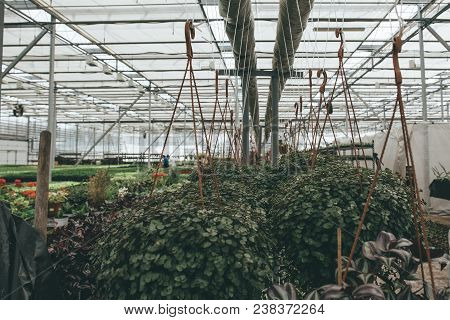Modern Greenhouse Or Hothouse, Cultivation And Growth Seeds Of Ornamental Plants, Flower Nursery Ins