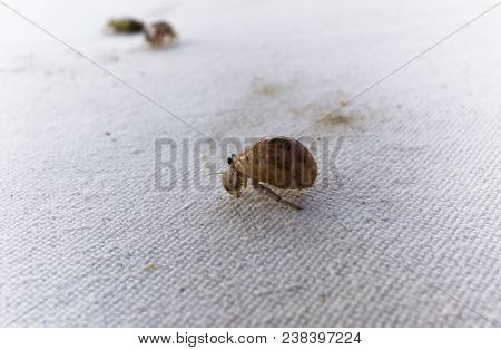 Hermit Crab On A White Background, Small
