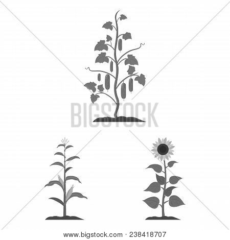 Plant, Vegetable Monochrome Icons In Set Collection For Design. Garden And Harvest Vector Symbol Sto