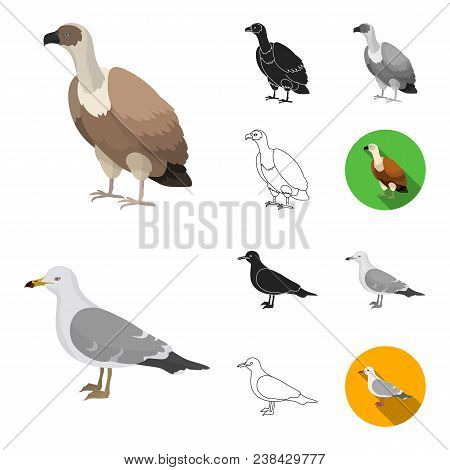 Types Of Birds Cartoon, Black, Flat, Monochrome, Outline Icons In Set Collection For Design. Home An