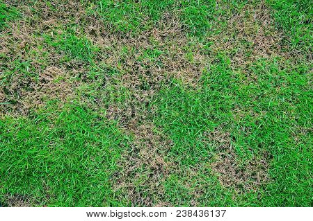 Grass Texture. Grass Background. Patchy Grass, Lawn In Bad Condition And Need Maintaining
