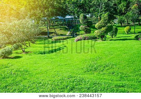 Landscape Formal, Front Yard Is Beautifully Designed Garden, Peaceful Garden, Morning Sunlight Shine