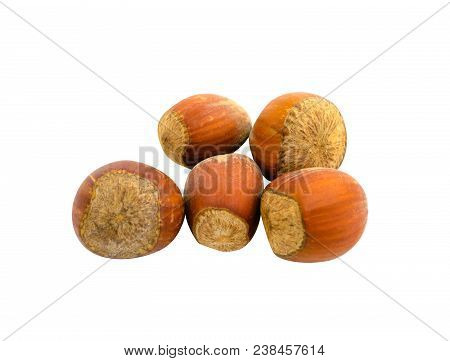 Several Hazelnuts In Shell Isolated On White Background. Photo.