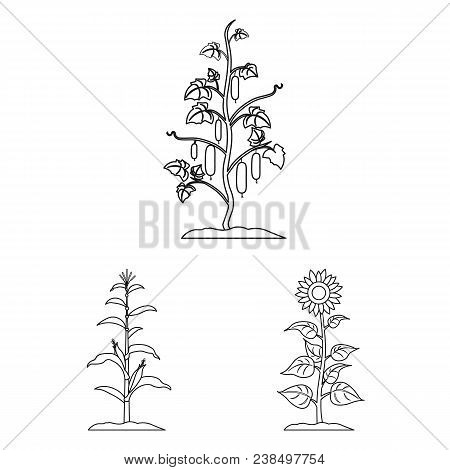 Plant, Vegetable Outline Icons In Set Collection For Design. Garden And Harvest Vector Symbol Stock