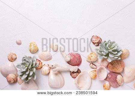 Sea Shells, Coral, Succulent Echeveria. Sea Objects. Selective Focus. Place For Text. View From Abov