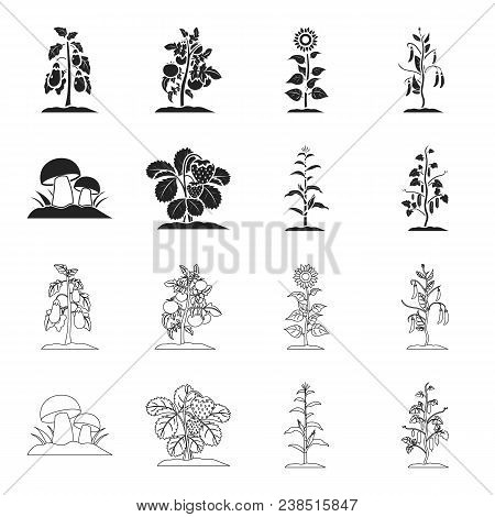 Mushrooms, Strawberries, Corn, Cucumber.plant Set Collection Icons In Black, Outline Style Vector Sy