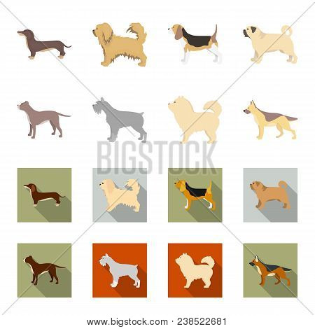 Pit Bull, German Shepherd, Chow Chow, Schnauzer. Dog Breeds Set Collection Icons In Cartoon, Flat St