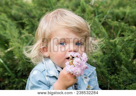 Little Charming Blonde Sniffing Pink Sakura Flowers