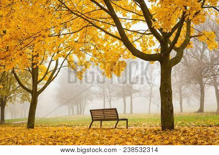 Horizontal Fall Background With Trees And Orange Leaves In Foggy Park With Solitary Bench