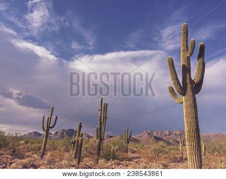 Beautiful desert landscape in Scottsdale,Arizona.   Saguaro Cactus trees in foreground.