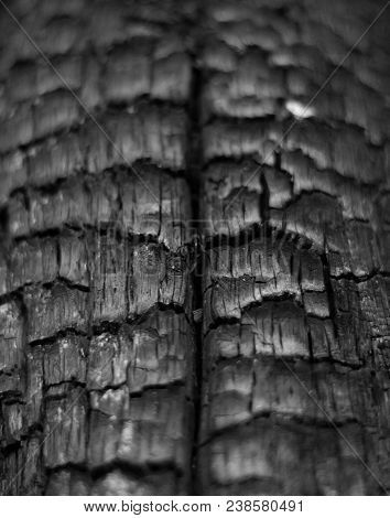 Charred Tree Structure With A Small Spider In The Center