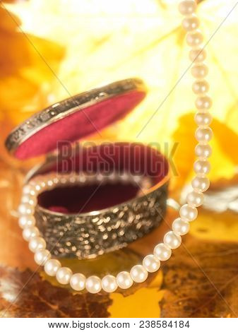 Whites Pearls In A Silver Case, On An Autumnal Background Of Leaves