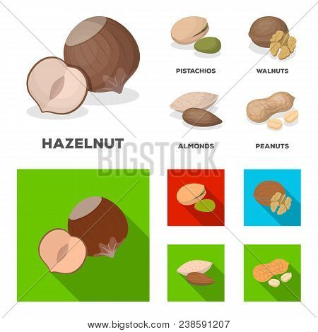 Hazelnut, Pistachios, Walnut, Almonds.different Kinds Of Nuts Set Collection Icons In Cartoon, Flat