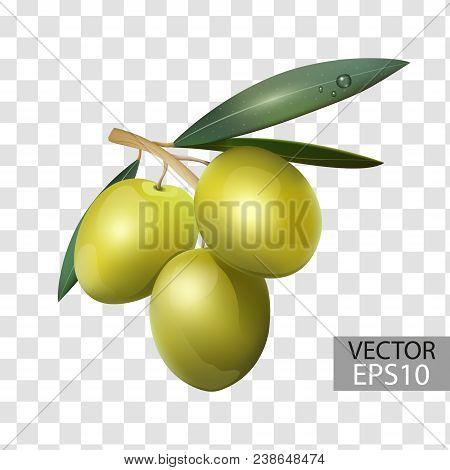 Olive Branch, Green Olives On A Transparent Background, Healthy Food. 3d Effect. Vector Illustration