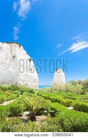 Vieste, Italy, Europe - Vegetation At The Chalk Rocks Of Vieste