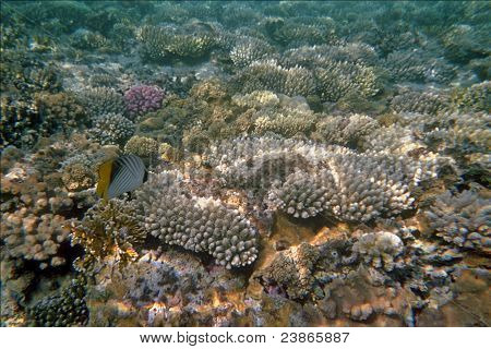 Fish swimming by coral