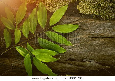 Cinnamon Leaf, Tropical Leaf, Wooden Table, Seasoning Leaf