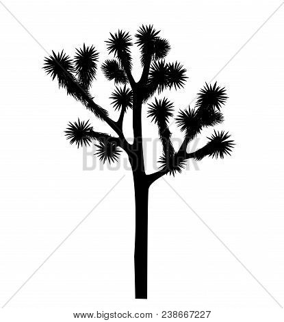 Joshua Tree Vector Isolated On White Background. Desigh Element With Yucca Brevifolia Black Silhouet