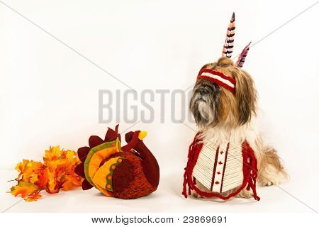 Shih Tzu Dressed As An Indian.