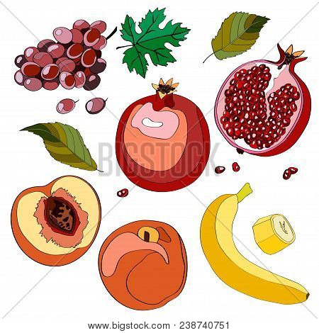 Vector Illustration, Set. Grapes, Grapes, Grapes, Pomegranate, Garnet, Half Pomegranate, Pomegranate