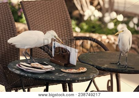 Birds Steal Pizza Leftovers From Table In Outdoor Cafe. Food, Forage, Feed. Nature, Animal, Fauna, W