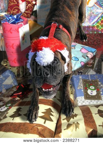 A boxer dog dressed as Santa on christmas packages poster