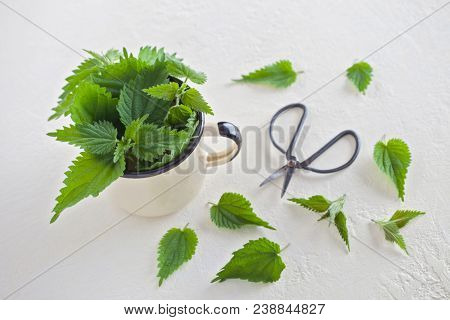 fresh nettle on white background - healthcare and medical
