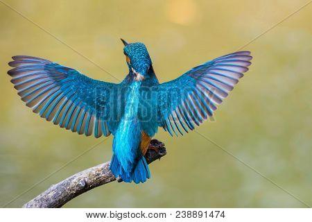 Blue Bird On Tree Brunch During Daytime