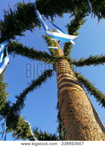 Traditional Big Maypole In South Bavaria With Conifer Branches And Decorative Ribbons  In White-blue