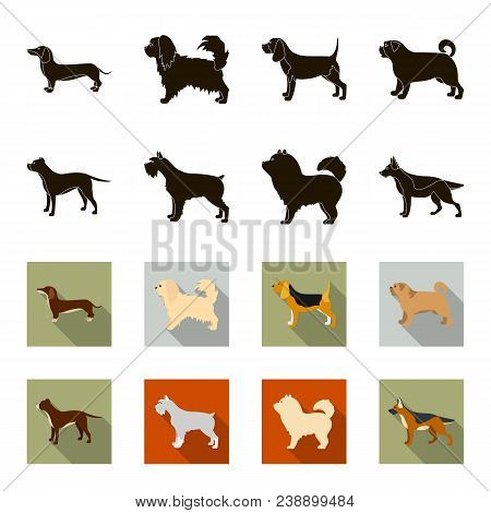 Pit Bull, German Shepherd, Chow Chow, Schnauzer. Dog Breeds Set Collection Icons In Black, Flet Styl
